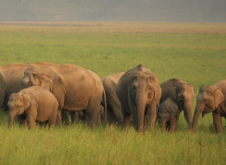 an_elephant_herd_at_jim_corbett_national_park-commons2