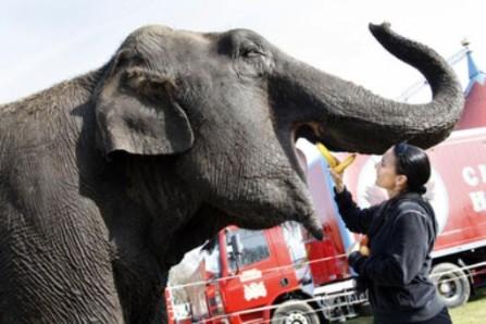 olifant3